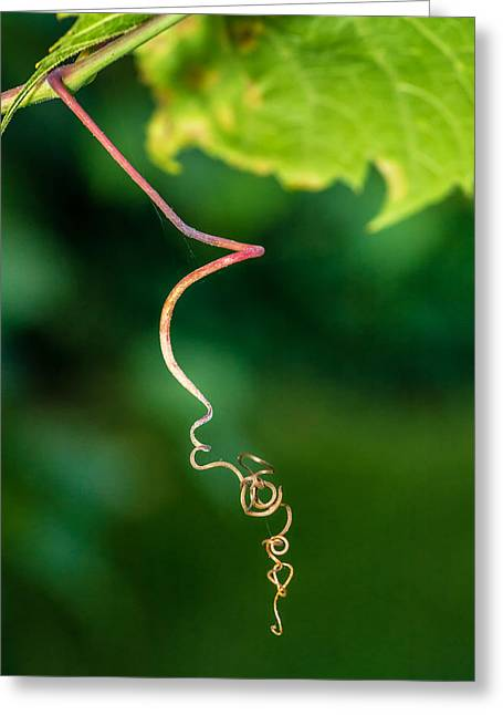 Vine Leaves Greeting Cards - On The Prowl Greeting Card by Steve Harrington