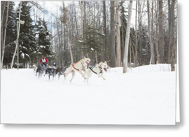 Fur Rendezvous Greeting Cards - On the Race Trail Greeting Card by Tim Grams