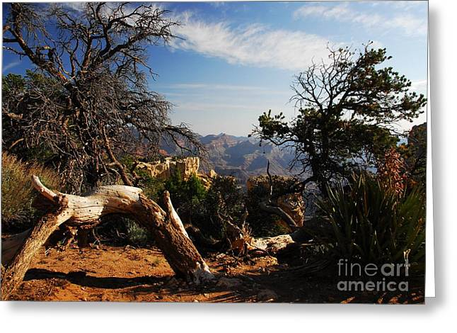 The Grand Canyon Greeting Cards - On The Rim Greeting Card by Mel Steinhauer
