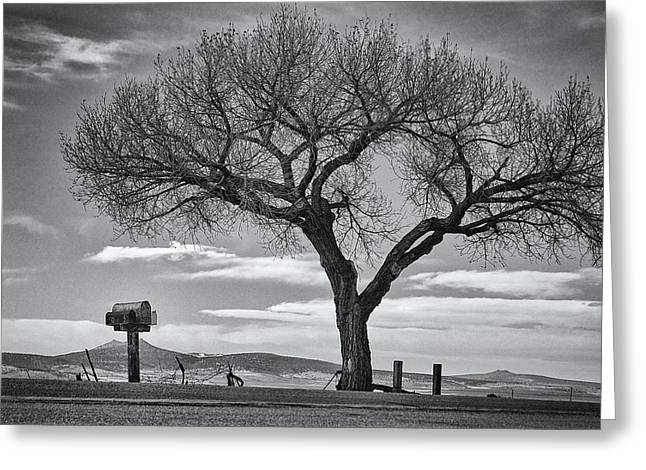 On The Road To Taos Greeting Card by Mary Lee Dereske