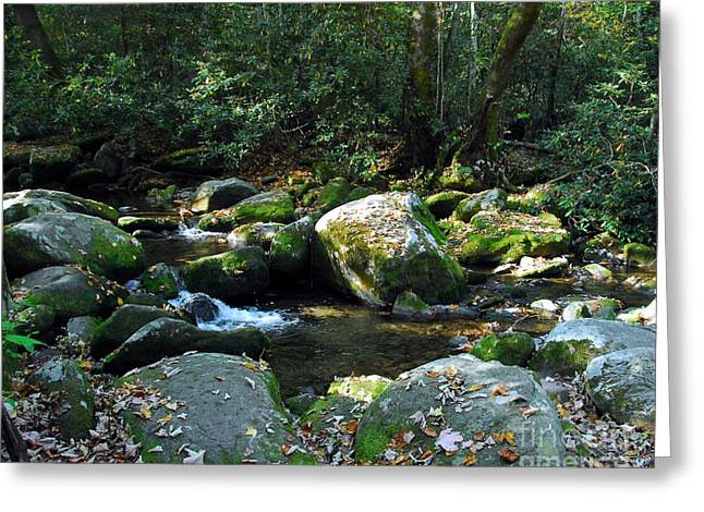 Fallen Leaf On Water Greeting Cards - On The Rocks Greeting Card by Mel Steinhauer