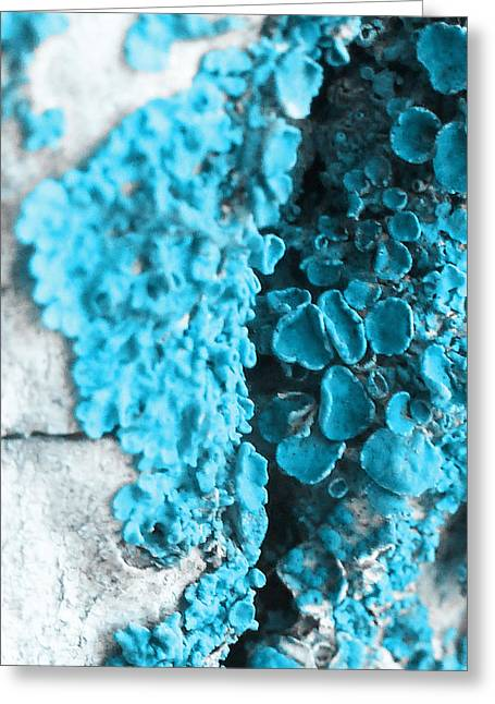 False-colour Greeting Cards - On the Rocks Greeting Card by Steve Taylor