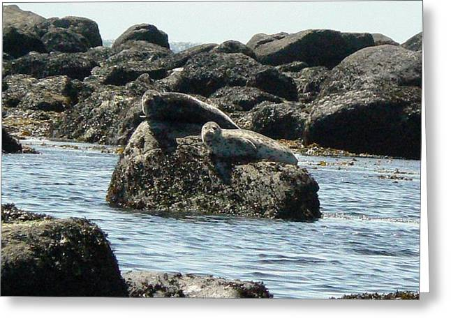 Tia Marie Mcdermid Greeting Cards - On the Rocks Greeting Card by Tia Marie McDermid