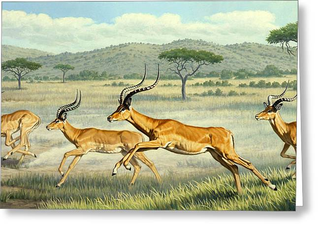 Wildlife Landscape Paintings Greeting Cards - On The Run -  Impala Greeting Card by Paul Krapf