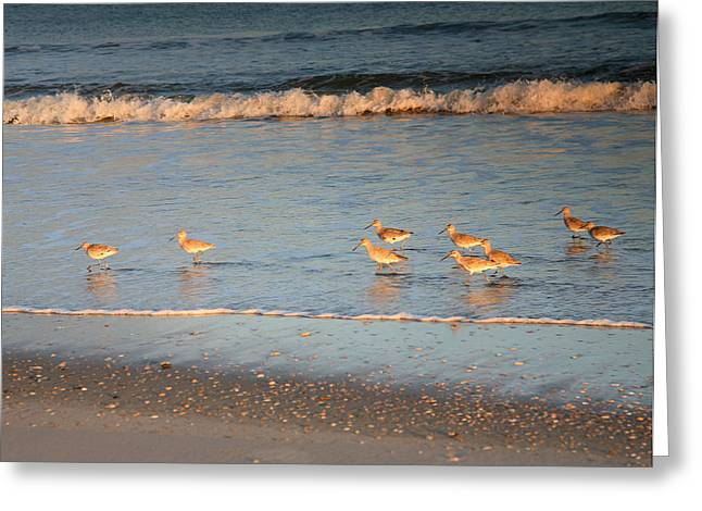 Seabirds Greeting Cards - On The Run Greeting Card by Steven Ainsworth