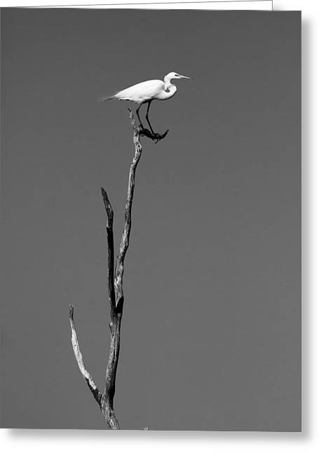 White Bird Greeting Cards - On the top of the island Greeting Card by Ellie Teramoto