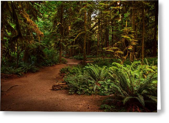 Provincial Park Bc Greeting Cards - On the Trail to .... Greeting Card by Randy Hall