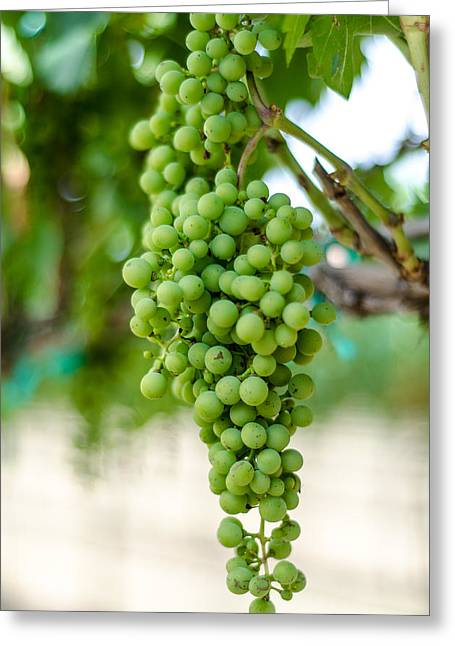 Grape Vines Greeting Cards - On the Vine Greeting Card by David Morefield