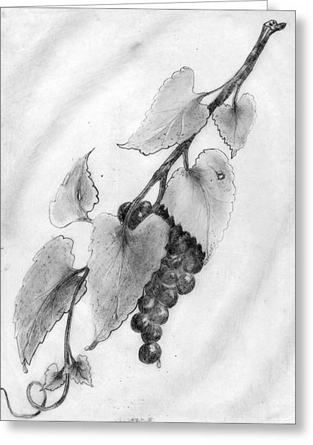 Grape Vines Drawings Greeting Cards - On the Vine Greeting Card by Milton Rogers