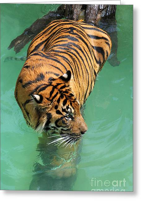 Cat Photo Greeting Cards - On The Water Greeting Card by Dan Holm