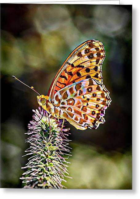 Print On Acrylic Greeting Cards - On the Wings of a Butterfly... Greeting Card by Lilia D