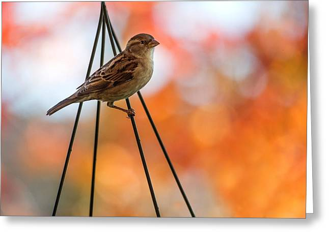 Sparrow Greeting Cards - On the Wires Greeting Card by Rebecca Cozart