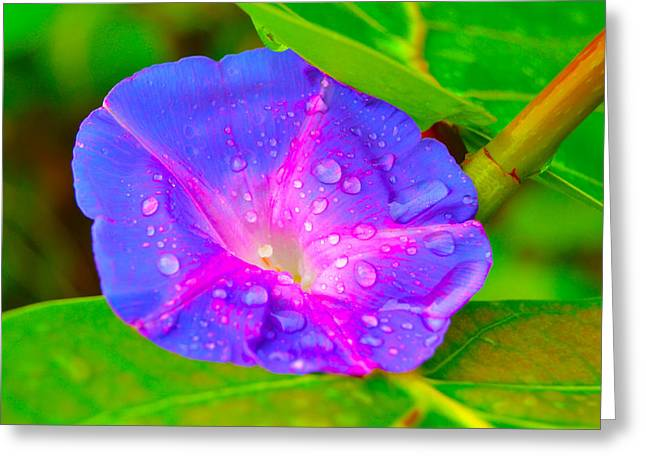 Florida Flowers Mixed Media Greeting Cards - On The Wrong Leaf Greeting Card by Gustave Kurz