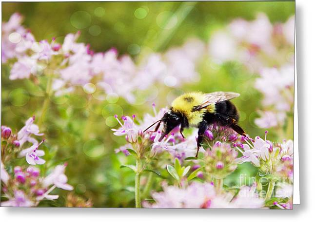 Blooms Greeting Cards - On Thyme Greeting Card by K Hines