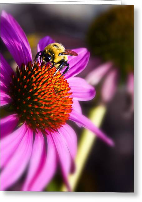 Indiana Flowers Greeting Cards - On top of the Flower Greeting Card by Michael Huddleston