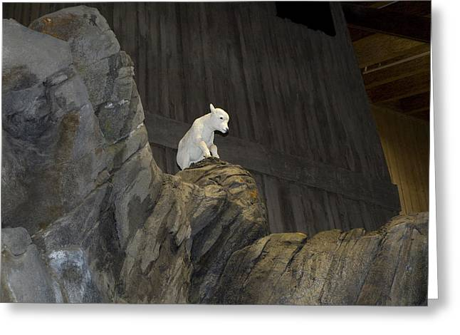 Sheep On Rocks Greeting Cards - On Top of The World Greeting Card by Tara Lynn