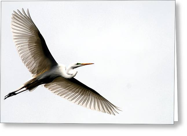Water Fowl Greeting Cards - On Translucent Wings Greeting Card by Skip Willits