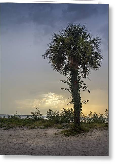 Palmetto Trees Greeting Cards - Once Upon A Rainy Day Greeting Card by Marvin Spates
