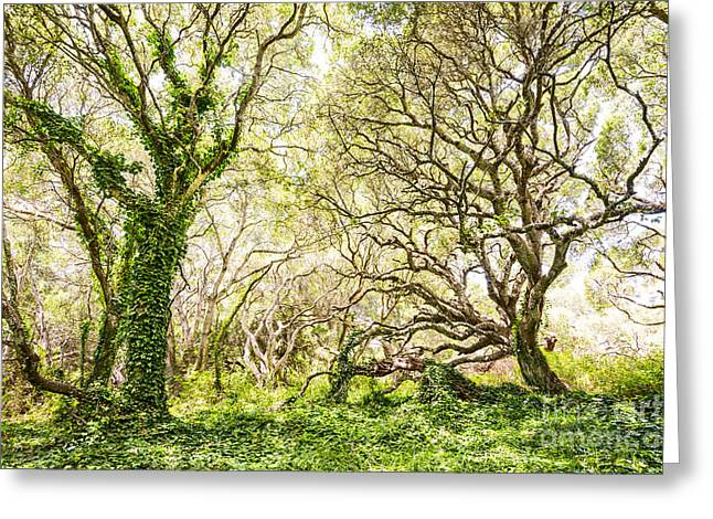 Old Tree Greeting Cards - Once Upon A Time Greeting Card by Jamie Pham