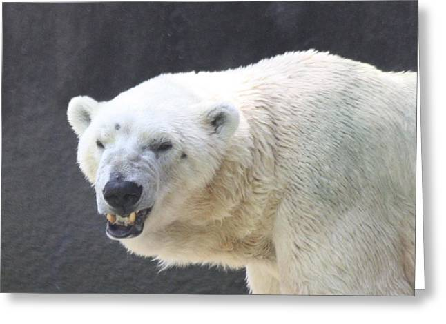 Angry Crowd Greeting Cards - One Angry Polar Bear Greeting Card by John Telfer