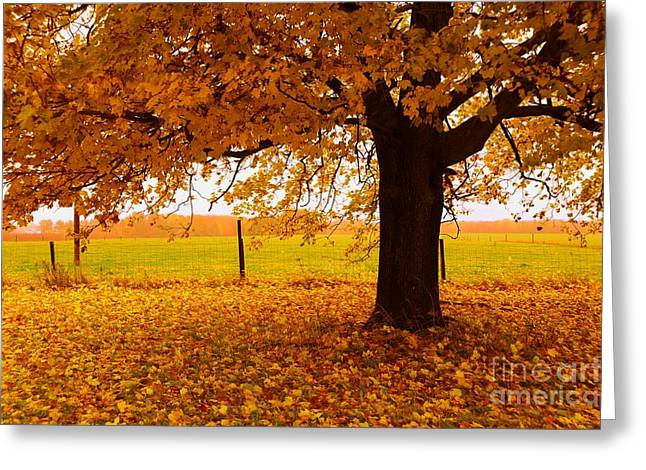 Fall Leaves Greeting Cards - One Autumn Tree Greeting Card by Terri Gostola