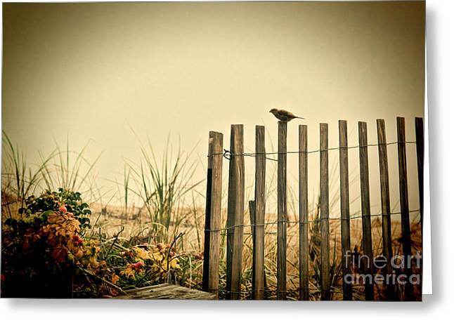 Seaside Decor Posters Greeting Cards - One Bird On A Fence Greeting Card by K Hines
