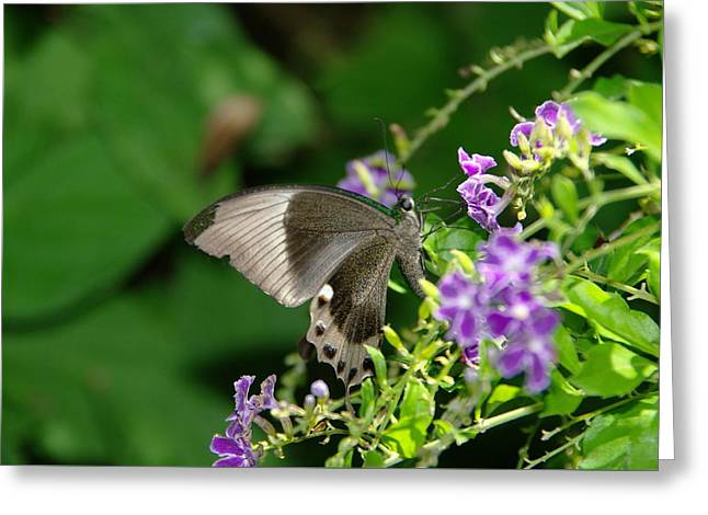 Little Critters Greeting Cards - One Butterfly Is All The Magic I Need Greeting Card by Jeff  Swan