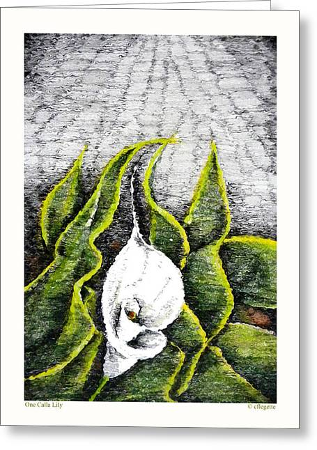 Calla Lily Drawings Greeting Cards - One Calla Lily Greeting Card by C F  Legette