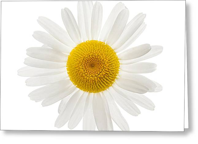 One Daisy Flower Greeting Card by Elena Elisseeva