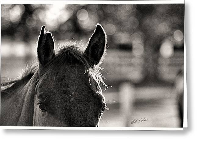 Bill Kesler Greeting Cards - One Ear Notched - Black and White Greeting Card by Bill Kesler