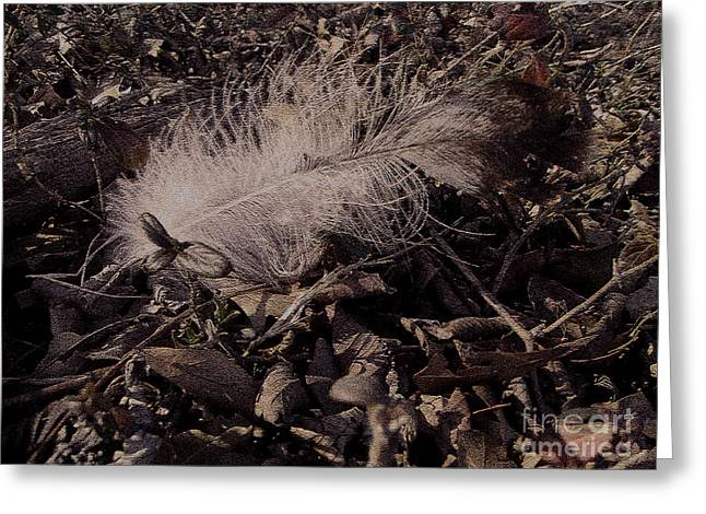 R. Mclellan Greeting Cards - One Fallen Feather Greeting Card by R McLellan