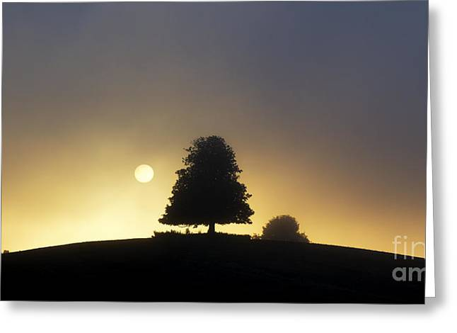 Rising Sun Greeting Cards - One Foggy Morning Greeting Card by Tim Gainey