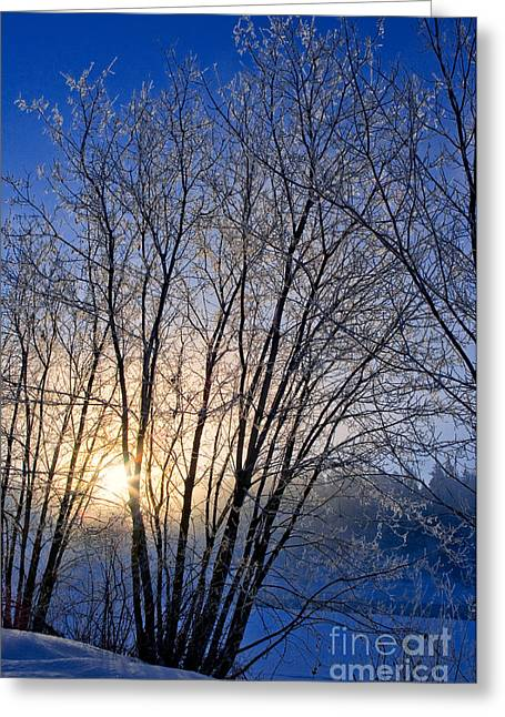 The North Greeting Cards - One Frosty Morning Greeting Card by Terry Elniski