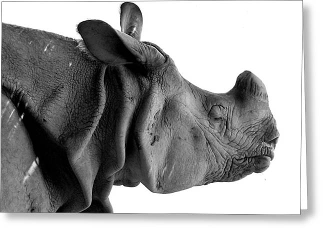 One Horned Rhino Greeting Cards - One-Horned Rhino Greeting Card by Atish Aman