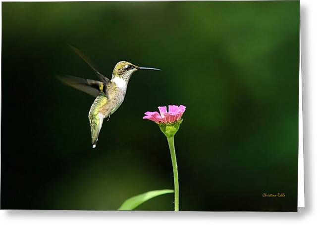 Birds With Flowers Greeting Cards - One Hummingbird Greeting Card by Christina Rollo