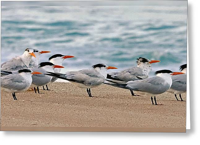 Tern Greeting Cards - One in the Crowd Greeting Card by Dawn Currie
