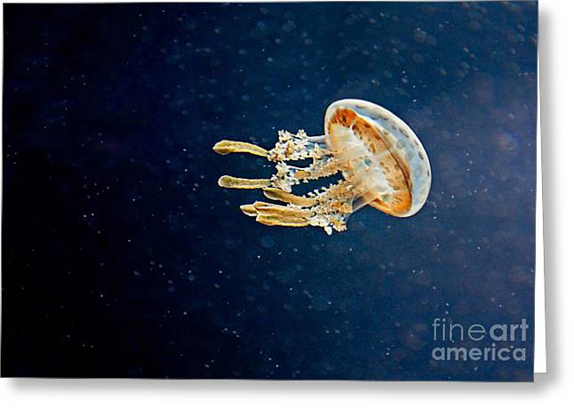 Jelly Fish Greeting Cards - One Jelly Fish Greeting Card by Valerie Garner