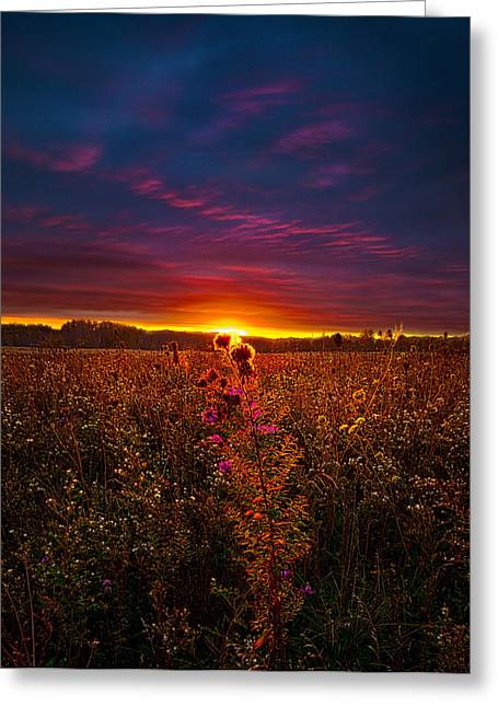 Geographic Greeting Cards - One Last Dance Greeting Card by Phil Koch