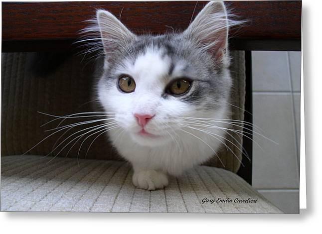 One Legged Kitty Greeting Card by Gary Emilio Cavalieri