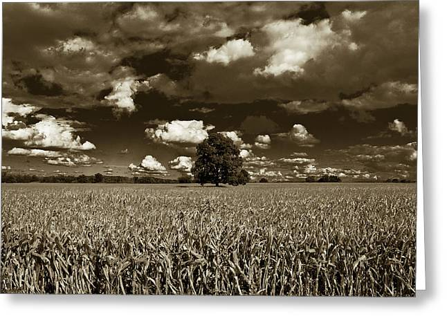 John Mcgraw Photography Greeting Cards - One Lone Tree in Michigan  Greeting Card by John McGraw