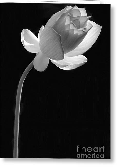 Florida Flower Greeting Cards - One Lotus Bud Greeting Card by Sabrina L Ryan