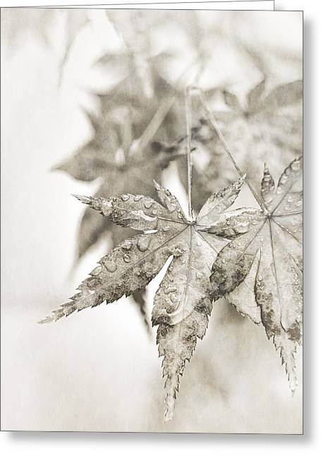 Caitlyn Grasso Greeting Cards - One Misty Moisty Morning Greeting Card by Caitlyn  Grasso