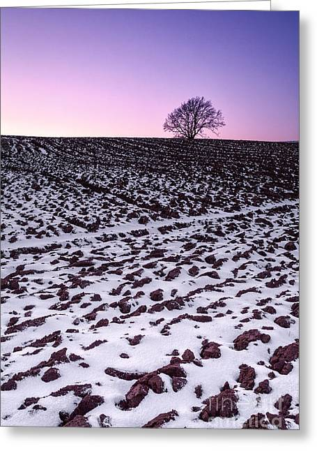 Fresh Snow Greeting Cards - One more tree Greeting Card by John Farnan