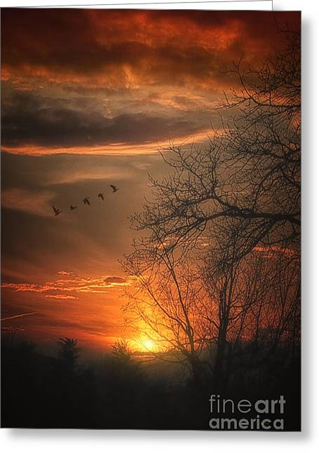 Sundown Framed Prints Greeting Cards - One Night In April Greeting Card by Tom York Images