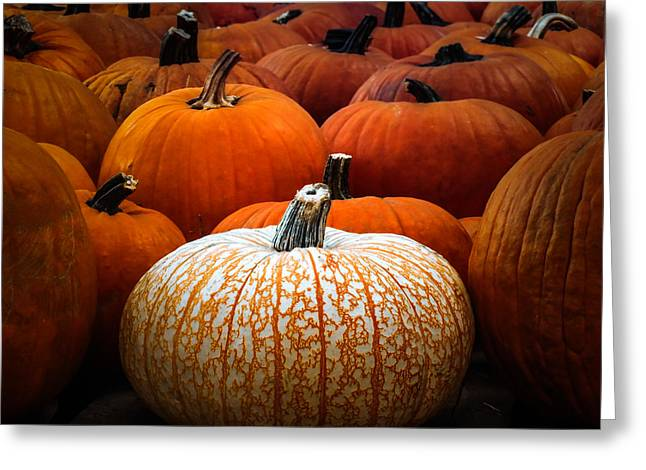 White Pumpkin Greeting Cards - ONE of a KIND Greeting Card by Karen Wiles