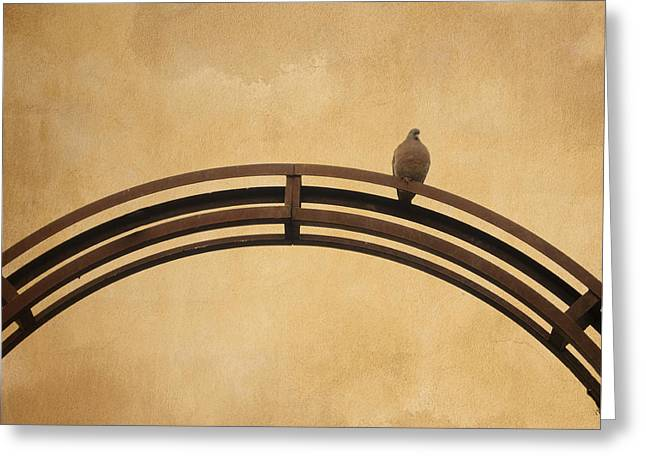 On Top Greeting Cards - One pigeon perched on a metallic arch. Greeting Card by Bernard Jaubert