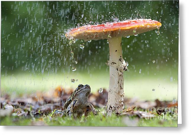 Fungi Photographs Greeting Cards - One Rainy Day Greeting Card by Tim Gainey