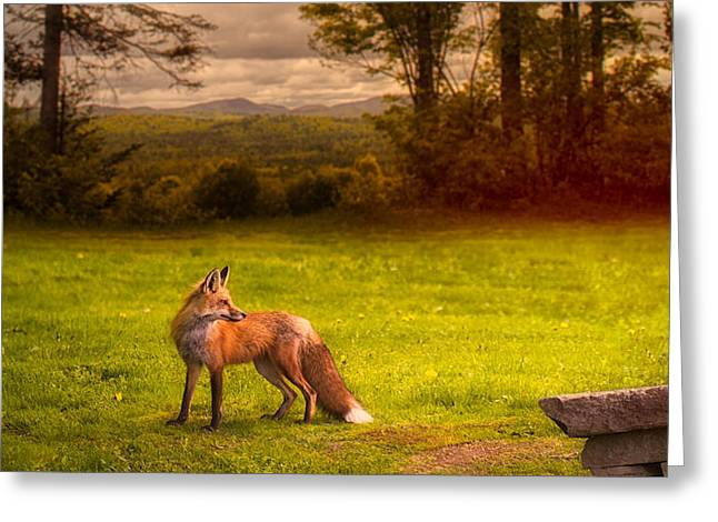 One Red Fox Greeting Card by Bob Orsillo