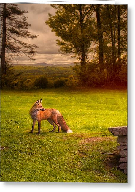 Maine Spring Greeting Cards - One Red Fox Greeting Card by Bob Orsillo