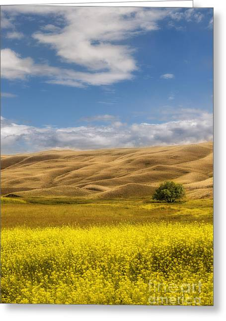 Field. Cloud Greeting Cards - One Greeting Card by Sandi Mikuse